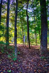 DSC05473-75_HDR (Capt Kodak) Tags: autumn chattahoocheerivernationalrecreationarea fall hdrefexpro2 madefrom3images medlockbridgepark nationalparkservice nikcollectionbygoogle niksoftware photomerge