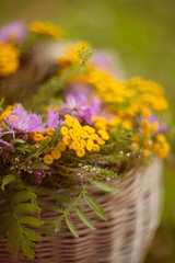 tansy (olli_loo) Tags: wildflowers tansy heather stilllife stillphotography colorful smoothness nature naturephoto natural flowersart flowermagic tenderness 85mm helios40 helios manual manuallens manualfocus macro softlens softbokeh softness tinyflowers likepainting basketofflowers basket herbal outdoor
