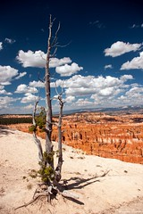 At the edge of Bryce Canyon (Joy Forever) Tags: tree sky clouds brycecanyon brycecanyonnationalpark utah polarizer