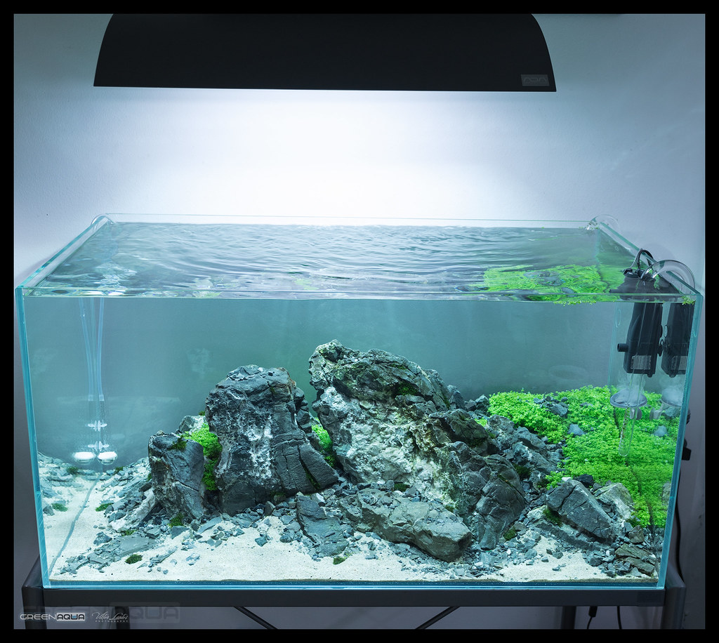 The World's Best Photos Of Ada And Aquascape