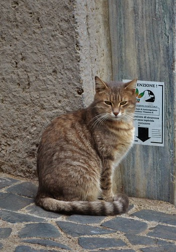 51 - il gatto