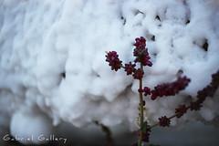 Salted Flower (Gabri & Photograph) Tags: salt sal añana spain flower purple flor salada salted white