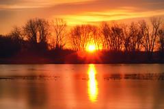 Wake Up Slow (flashfix) Tags: november142016 2016 2016inphotos nikond7000 nikon ottawa ontario canada 50mm sunrise silhouettes longexposure ndfilter nature mothernature morning dawn water river trees petrieisland flares sun