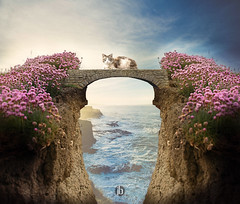 Cliff (iblushay : Thank you for visiting and the faves) Tags: photoshop photomanipulation cliff kitty