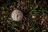 Here today gone tomorrow! (Kat Hatt) Tags: puffball grass fall leaves canada closeup white princeedwardcounty winner t519 mpt519 matchpointwinner