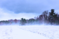 wind and snow (R. Welch) Tags: november bigfield blowingsnow snow wind winter colorful white green sky blue nature landscape snowscape snowing trees forest newyork websterny usa fujifilmx100s beautiful pasteltones