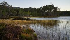 Loch an Ellein Cove (I) (Modesto Vega) Tags: cairngormsnationalpark cairngroms d600 fullframe landscape lochaneilein nikon nikond600 outdoor rothiermurcus scotland unitedkingdom water