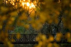 ... fleeting thoughts (mariola aga) Tags: evening river bridge riverbank trees autumn leaves golden color sun sunset light glow fleetingthoughts bokeh blur