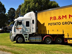 photo by secret squirrel (secret squirrel6) Tags: secretsquirrel6truckphotos craigjohnsontruckphotos mancarellaproduce strezleckihills freightliner cabover taughtliner 2016 yellow trucking mirboonorth steps tank