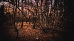 Broken Branches (Augmented Reality Images (Getty Contributor)) Tags: autumn canon colours fall forest hdr landscape leefilters longexposure nature perthshire scotland sunset trees woodland