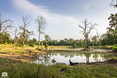 Into the Jungle (Satyajeet Sahu) Tags: jungle forest chhattisgarh trees nature canoneos600d landscape wideangle