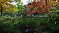Arbol Rojo (Red Tree) (RRP Photography) Tags: fortworthbotanicgardens fortworthjapanesegarden japanesegardens gardens lakes fallcolors autumn fall ponds pagodas