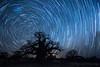 25-Botswana_2016 (Beverly Houwing) Tags: africa botswana desert islandoflostbaobabs kalahari mgadikgadipans saltpan night astrophotograhy sky stars milkyway galaxy longexposure startrail wideangle silhouette tree baobab