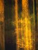 Ghost of Seasons Past (Brian Truono Photography) Tags: greatsmokymountainsnationalpark nps nationalpark nationalparkservice smokymountains abstract autumn blur exposureblending fineart fineartphotography landscape leaves light longexposure motion mountains multipleexposure natural nature texture trees yellow townsend tennessee unitedstates us