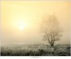 A new day (nandOOnline) Tags: mist morning strabrecht koud sunrise december nature nevel landscape vorst zonsopkomst dauw natuur strabrechtse heide cold fog ochtend landschap frost