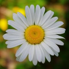 Daisy (~Bella189) Tags: pentax ottawa bigmomma fotocompetition fotocompetitionbronze herowinner pentaxk5 pregamewinner limieuxislanddogpark