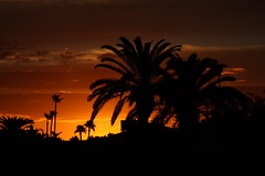 Sunrise (yerpop) Tags: trees clouds sunrise orangeskies burningskys skycloudssun perfectsunrisessunsetsandskys sunsetsandsunrisesgold cloudsstormssunsetssunrises