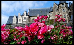 The roses from the Castle of Angers, France (Ioan BACIVAROV Photography+2,000,000visitsTHANKS) Tags: flowers france flower castle history rose wonderful interesting flora nikon historic beautifulview angers ioanbacivarovsphotostream ioancbacivarov
