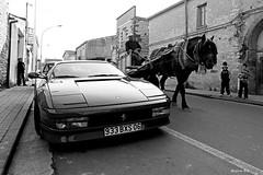 Cavalli diversi (stefano pia) Tags: sardegna street italy horse work sardinia ferrari uomo pia viaggi cavalli cavallo bianco antico stefano reportage lavoro oristano rossa trasporto viaggiare tradizione