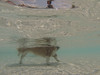 G0061470.jpg (imfaral) Tags: unitedstates southcarolina penny dogdayafternoon northcharleston