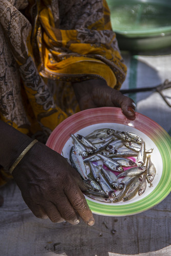 Mola are rich in micronutrients. Rangpur, Bangladesh. Photo by Holly Holmes, 2013