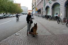 dagens hund (maj-lis) Tags: oktober skne sweden sverige malm hst mla minisemester