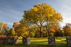 The cross (Master Pedda http://petersamuelsson.se/) Tags: autumn tree cross sweden autumnleaves halland mygearandme