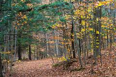 20131026-Vermont-48 (Laurel Tracy) Tags: mountains fall woods vermont autum hiking pumpkins chester vt hikingshoes ltworldtour ltsnapshots