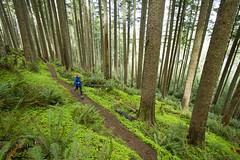 JBailie-Oswald_West-042913-0163 (Justin Bailie) Tags: ocean oregon forest coast outdoor lifestyle running run adventure trail pacificnorthwest northamerica oregoncoast recreation endurance pacificnw oswaldweststatepark oregoncoasttrail