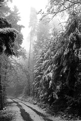 Yesterday and tomorrow pt.2 (Nekr0n) Tags: leica trees winter blackandwhite bw snow nature monochrome pine digital forest germany deutschland blackwhite x 24 28 24mm freiburg schwarzweiss wald blackforest asph f28 x1 compactcamera xseries elmarit primelens imbreisgau leicax1gallery