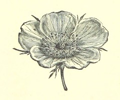 Image taken from page 216 of 'The Spanish Galleon. A West Country romance'