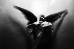 angel #3 (nicola tramarin) Tags: blackandwhite bw italy cemetery graveyard angel italia nicola bologna angelo icm biancoenero cimitero certosa intentionalcameramovement tramarin nicolatramarin