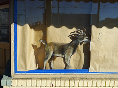 The Goat is the Hero of this establishment (glennbphoto) Tags: sanfrancisco window goat foundinsf rosales birria