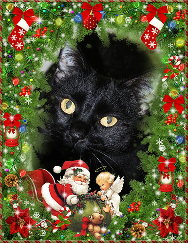 "Blacky  Wants To Wish Everybody ""A Merry Christmas ~ 2013 ""...... 25/12/2013.."
