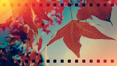 summer beeze (t.basel) Tags: autumn light summer film studio nokia leaf crossing sommer laub herbst creative bltter 1020 lumia fhotoroom