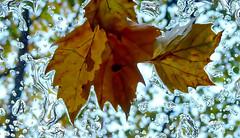 Glass roof Art.Explored (Omygodtom) Tags: street city roof winter wild macro art texture nature leaves rain season leaf dof raindrop panasonicfx35peoplethis