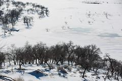 (zhouyousifang) Tags: china winter snow landscape  grassland   neimenggu 2013