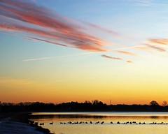Pastel Morning (DASEye) Tags: sky lake colors birds sunrise dawn geese nikon skies colours pastel ducks dayseye davidadamson