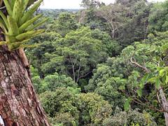 Canopy walk #3 (larigan.) Tags: bridge trees peru southamerica amazon rainforest treetops walkway jungle recreation activity explorama canopywalk larigan phamilton iphone4s