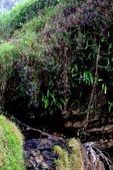 Elephant Falls2