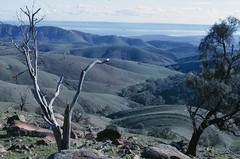 View from Hancocks Lookout, SW of Wilmington. (spelio) Tags: travel tree dead gulf bare south july australia scan hills canberra sa 1968 spencer rolling hancocks
