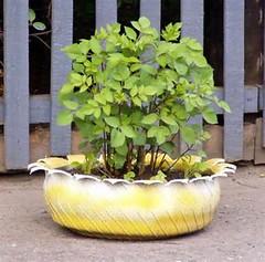 Planter-Tire Plantercue_net (DougBittinger) Tags: