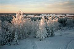 Return of the Sun (Simon_Bates) Tags: finland 2010 kuopio winter frozen snow 30c leica m6 35mm simonbates nature architecture lakes landscape ice forest rangefinder travel