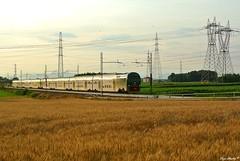 TAF trenord (Luigi Basilico) Tags: electric train italian milano ad eisenbahn bahnhof alta local bahn treno regional nord glint taf ferrovie cadorna frequentazione baureihe glintshot trenord