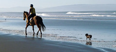 Afternoon ride on the beach (Maureen Pierre) Tags: horse dog beach log afternoon ride hills spencerpark