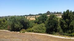 Rancho San Antonio-2460.jpg (MathTeacherGuy) Tags: hiking hills trail cupertino southbay losaltos ranchosanantonio