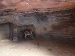 Ezeltje in een van de tombes..
