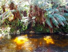 Golden depths (LeelooDallas) Tags: australia tasmania pyengana halls falls waterfall tree water forest andscape dana iwachow fuji finepix hs20 exr