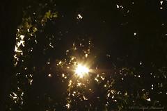 Tervuren.Belgium (Natali Antonovich) Tags: tervuren park belgium belgie belgique light parallels