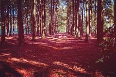 #makesmehappy #sunnyday #nature #lovetodothis #beautifulnature #instapic  #sunnyday #walking #inthewoods (lyjajaco) Tags: instagramapp square squareformat iphoneography uploaded:by=instagram rise